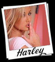 http://theklassykat.com/user_images/tkk_harley.jpg